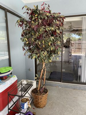 Beautiful 6ft. Artificial Ficus for Sale in Palm Harbor, FL