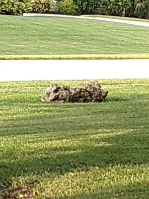Free Landscape rocks/ boulders just pickup and add st. Augustine sod where the rock was. Possibly three pieces of sod. for Sale in Palm City, FL
