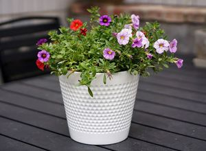 8 inch Dotted Ceramic Planter Pot Indoor Home Decor Outdoor Flower Garden Plant White NEW for Sale in Garfield, NJ