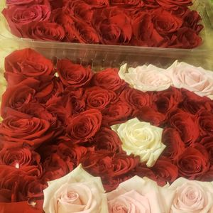 Roses & Petals for Sale in West Palm Beach, FL