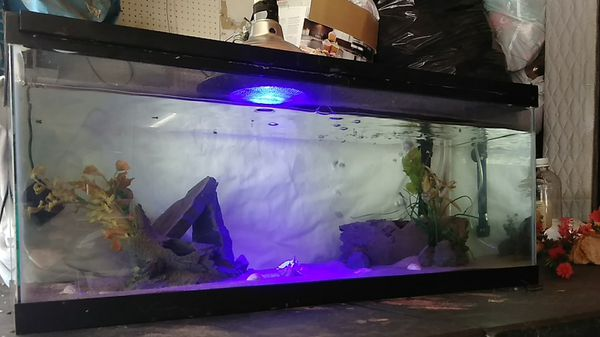 20 Gallon Fish Aquarium