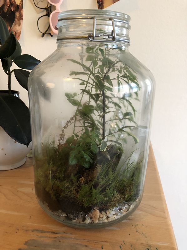 Terrarium with plants and crystal