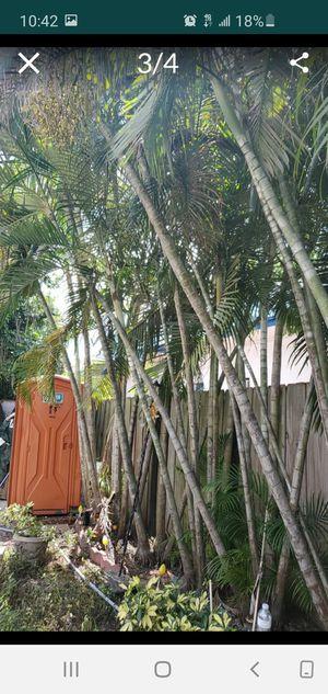 Palmas gratis!!!! for Sale in Miami, FL