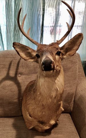 7 Point Buck Deer Mount for Sale in Camp Hill, PA