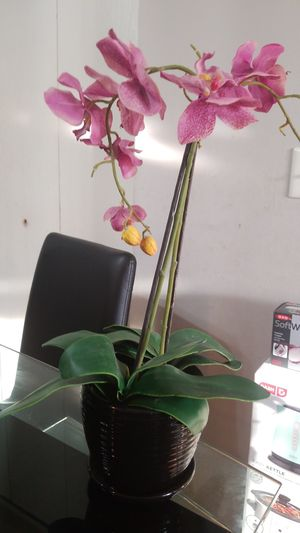 Beautiful orchid flower with vase for Sale in Columbus, OH