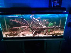 55 gallon fish tank for Sale in Tampa, FL
