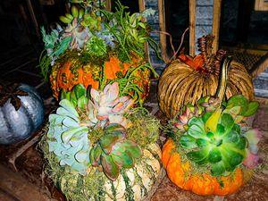 Real succulent pumpkins for Sale in Hesperia, CA