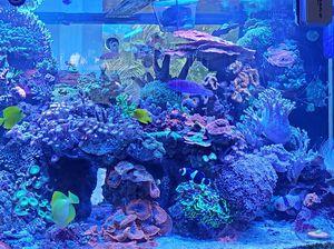Aquarium for Sale in Sunrise, FL