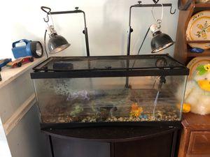 Turtle and turtle tank for Sale in Manassas, VA