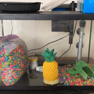 10 Gallon Fish Tank With Everything You Need Fish Included! for Sale in Port Charlotte, FL