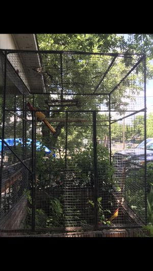 Bird cage 150.00 firm for Sale in Georgetown, TX