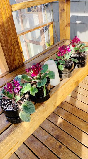 Price is for each—Live indoor perennial African Violet house plant in a ceramic planter pot—firm $ for Sale in Seattle, WA