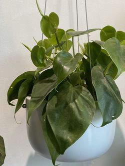 """6"""" Modern Hanging White Ceramic Planter for Sale in Long Beach,  CA"""