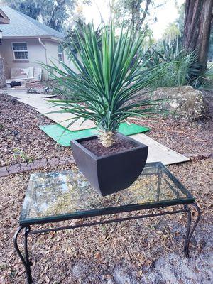 Fake plant in black base for Sale in Riverview, FL
