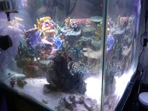 90 gallon Cube Marineland tank for Sale in Chicago, IL