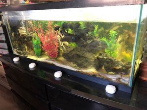 Hundred gallon fish tank white sand rocks for Sale in Bay Point, CA