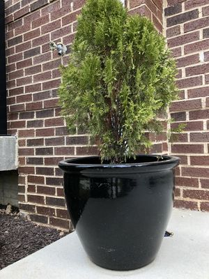 Pair of large entryway planters for Sale in Fairfax, VA
