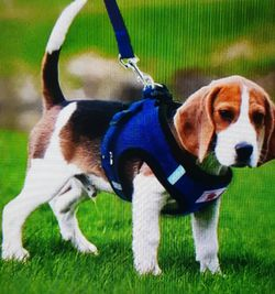 New Pet Small Dog Corduroy Puppy Harness & Leash for Sale in Land O Lakes,  FL