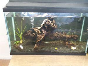 29 gallon fish tank for Sale in Tacoma, WA