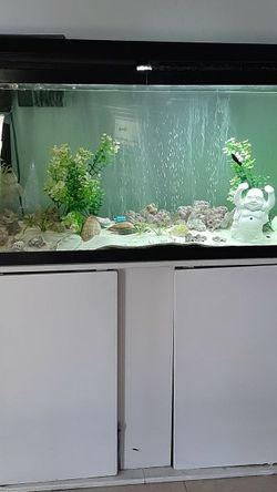 Aquarium 12x48, Pump And Filters, New Lights,Top And White Stand Included For $125 for Sale in Plant City,  FL