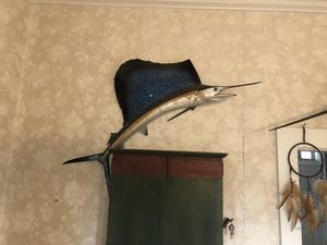 Sailfish for Sale in Bethlehem, PA