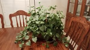 Artificial plant for Sale in Katy, TX