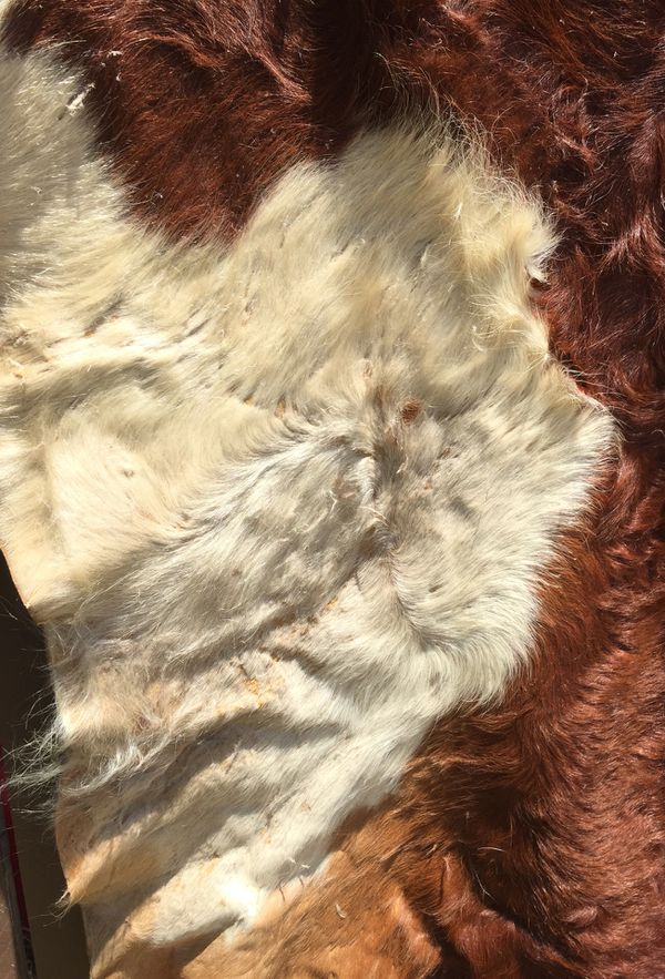 Western Country Cowhide large rug mat.. $60 OBO