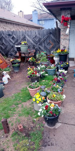 Plants in nice containers for Sale in Fort Worth, TX