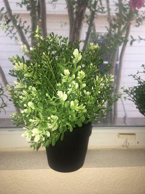 4 fake plants in plastic pots for Sale in Austin, TX