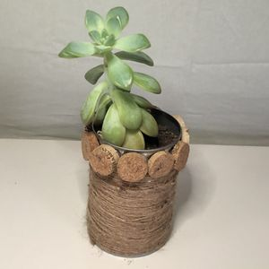 Handmade wine cork and twine planter with succulent for Sale in Wayne, MI