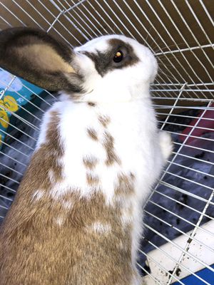 Rabbit 🐇 🐰 Cage & All Age Pellets for Sale in Modesto, CA