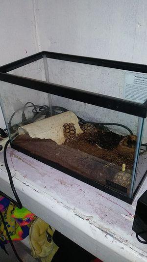 3 baby salcata tortoises tank and set up. for Sale in Tucson, AZ