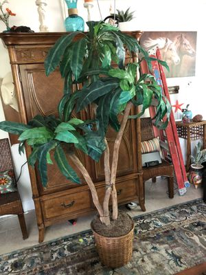 Tropical tree 7 ft in wicker container w/moss for Sale in Lake Park, FL