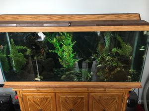 Fully stocked 55 gallon aquarium stand and canister filter for Sale in Leesburg, VA