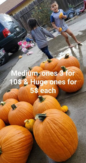 pumpkins for sale for Sale in Stockton, CA