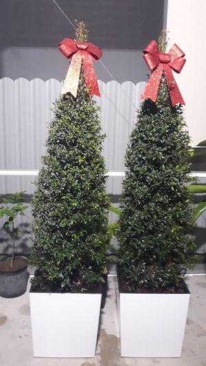Topiary plant NATURAL pot incluye 15×16 for Sale in Hialeah, FL