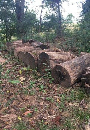 Free firewood for Sale in Ringgold, GA