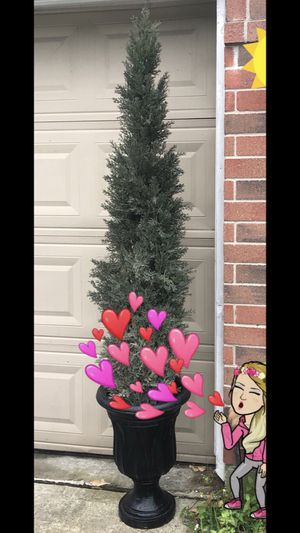 6 feet tall Mini Cedar Pine Tree Topiary with ceramic Planter for Sale in Houston, TX