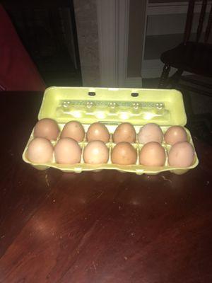 Fresh Farm Eggs for Sale in Lexington, KY