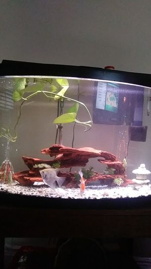 Fish tank for Sale in Boston, MA