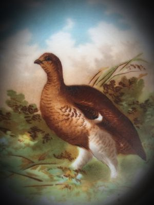 Super Rare Bavaria Germany Game Plate Quail/Pheasant/Hen/Bird Z.S & CO for Sale for sale  San Diego, CA