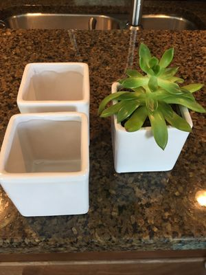 Succulent and pots for Sale in Virginia Beach, VA