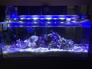 Salt water fish tank aquarium for Sale in Burke, VA