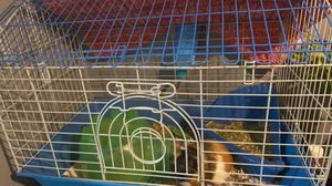 Guinea pig cage for Sale in Louisville, KY
