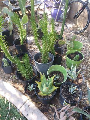 Succulents for sale! for Sale in Surprise, AZ