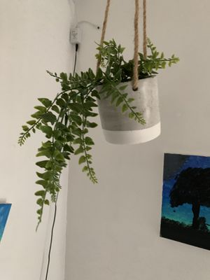 Hanging plant for Sale in Riverside, CA