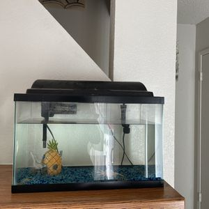Fish Tank And Supplies for Sale in Fresno, CA