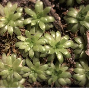 Baby Succulents for Sale in Westbury, NY