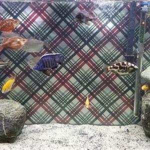 80 gallon fish tank aquarium fully equipped $750 for Sale in Colton, CA