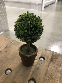 Mini Topiary for Sale in San Diego,  CA